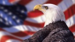 Bald Eagle and AmericanFlag