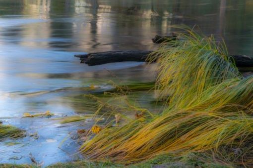 Grass, River, Yosemite