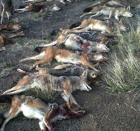 Dead Jackals